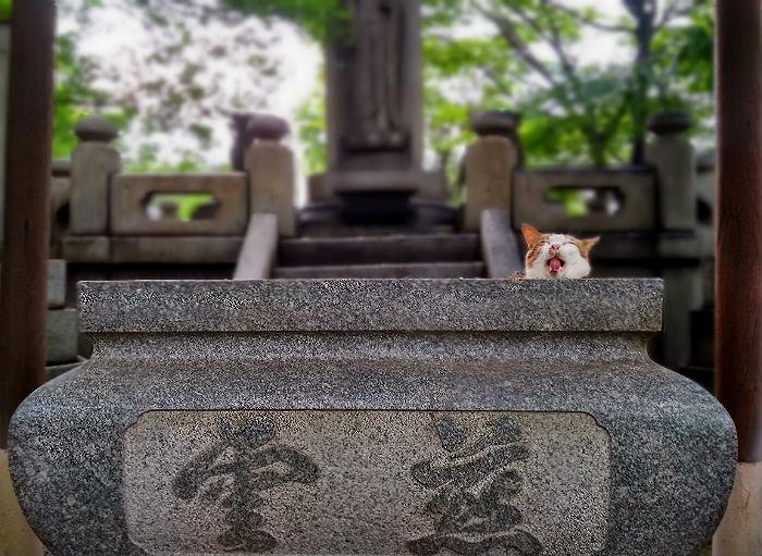 fukuoka-temple-cat