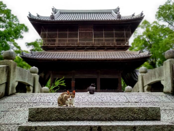 fukuoka-temple-cats-2